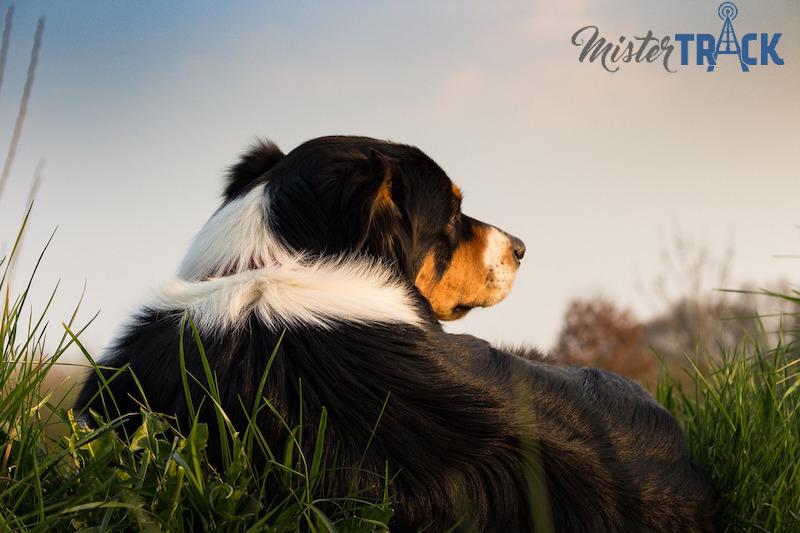 Balise GPS Mister Track pour les chiens de chasse